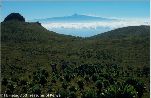 Mt.KenyaAberdares