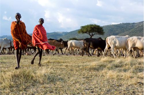 MasaiHerders